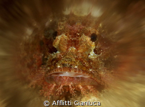 skorpion....zoom by Afflitti Gianluca